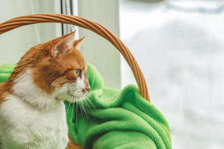 Red-and-white kitty is peaceful slumbering at the new green plaid on the windowsill. Cozy home concept. Close up.