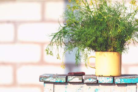 Bunch of dill in old yellow cup on vintage wooden table. Outdoor, sunny autumn day. Shallow depth of the field. 写真素材