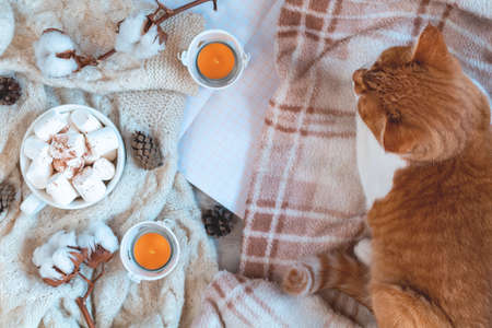 Red white cat on plaid, cup of coffee, cotton plant flower branches, notepad, candles. Autumn winter beautiful background, cozy home concept, copy space.