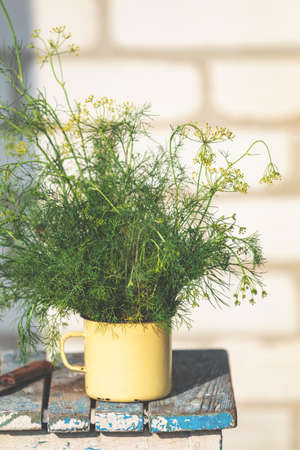 Bunch of dill in old yellow cup on vintage wooden table. Outdoor, sunny autumn day. Shallow depth of the field. Stock Photo