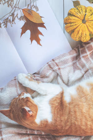 Red white cat sleep on plaid, pumpkin, autumn leaves, notepad. Autumn winter beautiful background, cozy home concept, copy space.