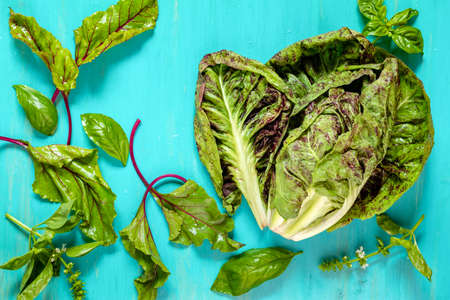 Pile of homegrown organic young lettuce chicory, beet leaves and basil with water drops on blue turquoise wooden table.  Fresh harvested chicory endive on blue background, top view. Stock Photo