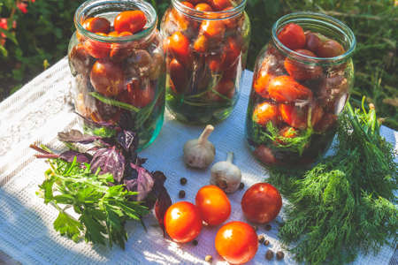 Marinated preserving jars. Homemade dark red tomatoes pickles with basil, fresh parsley, dill, spices on summer outdoor. Fermented food.