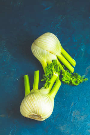 Fresh Florence fennel bulbs or Fennel bulb on dark blue concrete background. Healthy and benefits of Florence fennel bulbs.