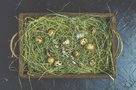 Quail eggs on the hay and willow branches and green branches of thread in wooden box, black concrete table surface. Dark rustic style. Top view. Happy Easter greeting card.