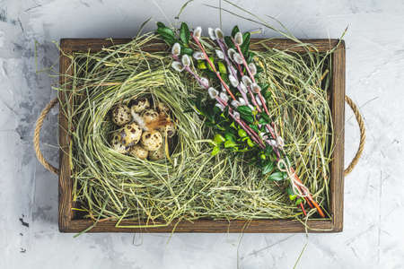 Quail eggs on the hay nest in wooden box, light gray concrete table surface. Dark rustic style. Top view. Happy Easter greeting card. Stock Photo