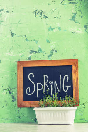 Calligraphic inscription hand lettering letters spring on black chalkboard standing on gray concrete table surface and green background with thyme in white basket. Spring coming concept background.