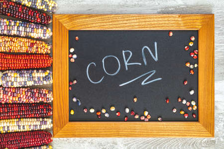 Cheerful and Colorful dried Indian Corn on light gray wooden surface as decoration for Thanksgiving Table, Halloween, and the Fall Season. Beautiful food art background, top view, flat lay Stock Photo - 126343717