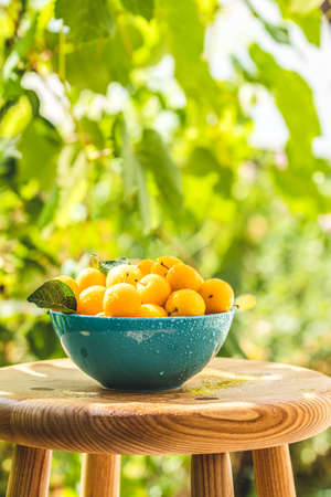 Handful of yellow cherry plums with water drops in blue bowl on the green nature background with sunny light in the garden Stock Photo - 128015667