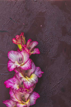 Flat lay composition with beautiful pink gladiolus flowers on claret concrete background. Pattern of gladiolus with space for your text, holiday greeting card Stock Photo - 128015674