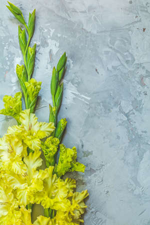 Border frame made of yellow gladiolus on gray concrete background. Pattern of gladiolus with space for your text, holiday greeting card. Valentine's. Flat lay, top view. Frame of flowers Stock Photo - 128015688