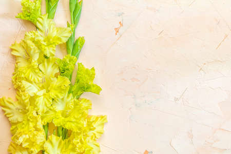 Flat lay composition with beautiful gladiolus flowers on pink concrete background. Pattern of gladiolus with space for your text, holiday greeting card Stock Photo - 128302437