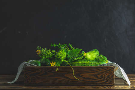 Green fresh cucumber in wooden box. Dark background. Close up. Gmo free green cucumbers. Natural good food. Stock Photo - 128860973