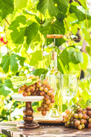 Bunch of grapes with water drops on the table. Wine glasses and bottle of wine. Sunny garden with vineyard background, summer mood concept, selective focus Stock Photo - 128861007
