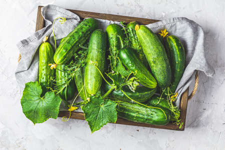 Green fresh cucumber in wooden box on light gray concrete surface table. Flat lay, top view. Gmo free green cucumbers. Natural good food. Stock Photo - 128861494