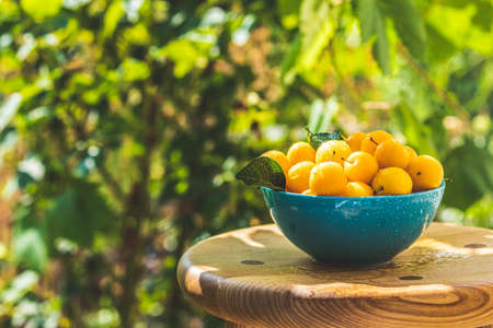 Handful of yellow cherry plums with water drops in blue bowl on the green nature background with sunny light in the garden Stock Photo - 129770251