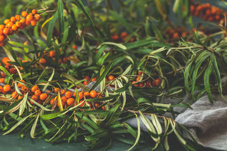 Ripe sea buckthorn berries on a branch with leaves on sackcloth rag over dark green concrete background Stock Photo - 130484028