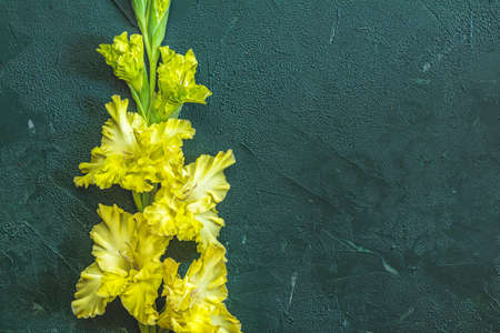 Flat lay composition with beautiful gladiolus flowers on dark green concrete background. Pattern of gladiolus with space for your text, holiday greeting card 写真素材