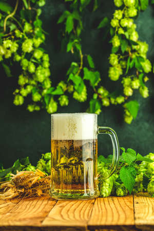 Beer and hop plant. Still life with beer and hop plant in retro style. Glass of cold foamy beer and hop on a dark background.