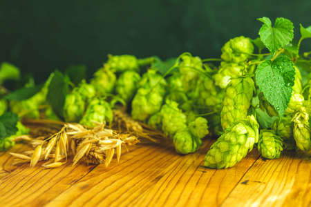Fresh branches and cones of green hop and ears of barley over old wooden background. Beer concept with selective focus