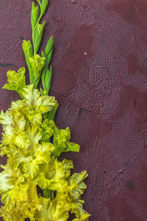 Flat lay composition with beautiful gladiolus flowers on claret concrete background. Pattern of gladiolus with space for text, holiday greeting card
