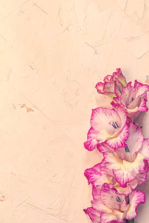 Border frame made of pink gladiolus on pink concrete background. Pattern of gladiolus with space for your text, holiday greeting card. Valentines. Flat lay, top view. Frame of flowers 写真素材
