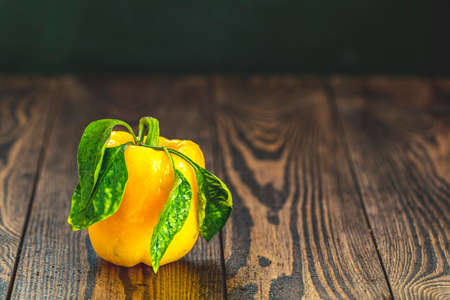 Single ripe organic fresh sweet yellow pepper on dark wooden table. Selection of healthy food for heart, life concept, copy space