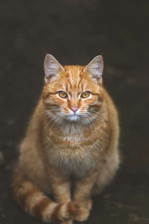 Portrait of a street homeless red cat sitting and looking at camera in old european city, animal natural background. Stock Photo - 139793265