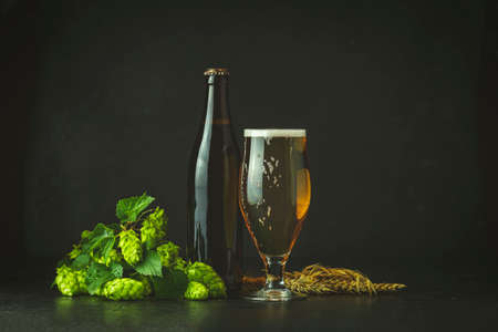 Still life with beer and hop plant in retro style. Glass of cold foamy beer brown bottle of beer and hop on a dark background