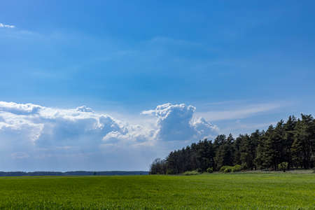 Panoramic view wheat fields under stunning sky background. Beautiful springtime in the countryside. Stock Photo
