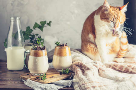 Cute red white cat relaxed near two glasses of Iced Dalgona Coffee on dark wooden surface. Trend korean drink latte espresso with coffee. Cozy home concept. Stay at home and relax