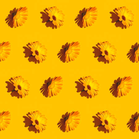 Diagonal pattern from marigold calendula flower on bright yellow background. Creative minimalist flat lay with hard light. 写真素材