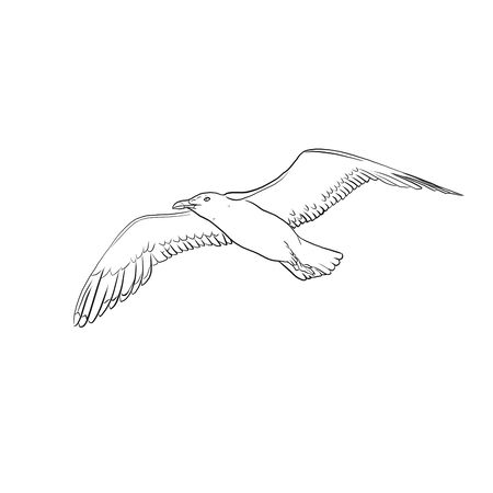Flying seagull on a white background. Illustration.