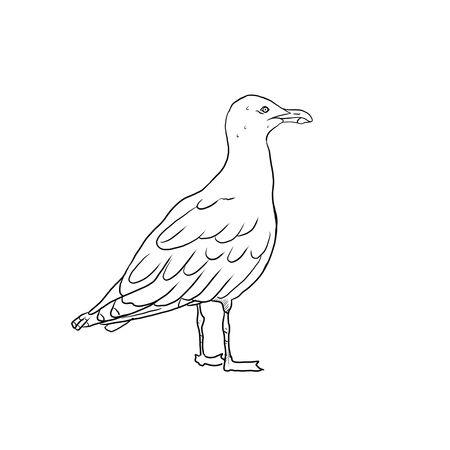 Seagull - Larus argentatus on a white background Фото со стока