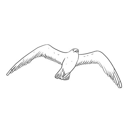 Seagull on a white background