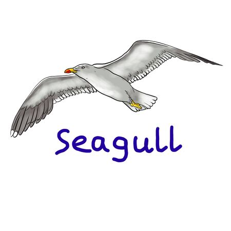 Flying seagull and the inscription seagull on a white background Фото со стока