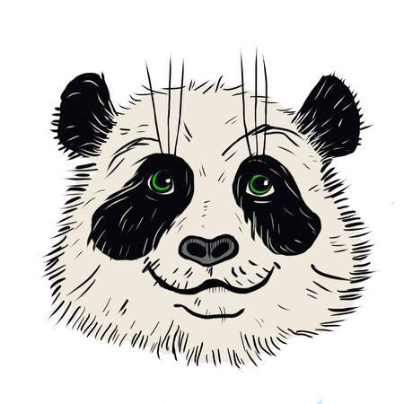 Panda animal cute face. Asian panda head portrait. Realistic fur bamboo portrait of a funny black and white panda animal isolated on a white background. Фото со стока