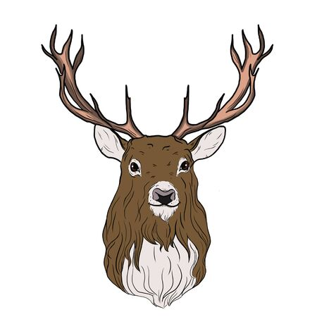 Illustration of an isolated deer on a white background
