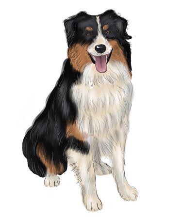 Bernese Mountain Dog. Realistic Portrait of Berner Sennenhund on watercolor background. Large Dog Breeds. Animal art collection: Dogs. Hand drawn pet illustration.