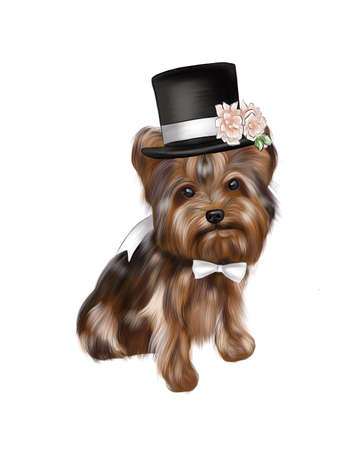 Illustration of a Yorkshire Terrier dog in a hat and bow tie.