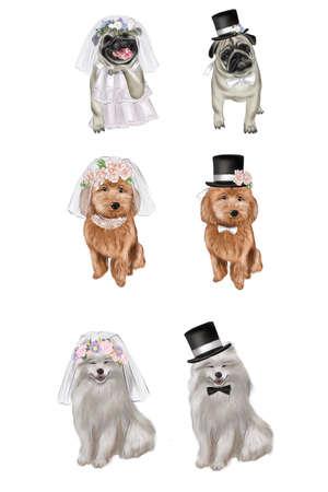 Valentines Day. Pug wedding. Samoyed wedding, Balonki wedding.