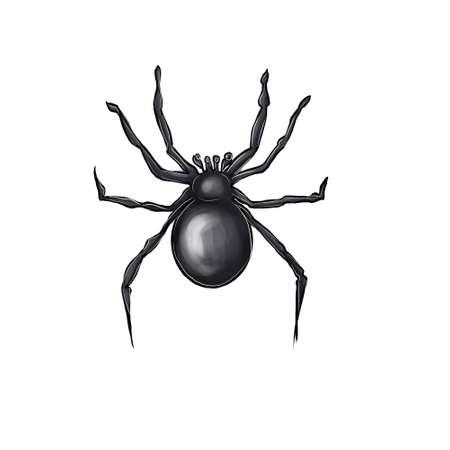 Black spider on a white background. Фото со стока