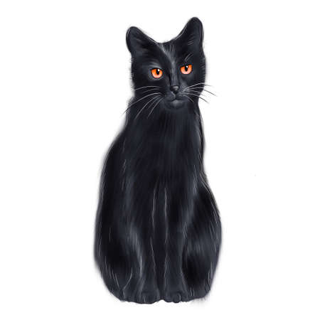 Black cat sitting in front of white background Фото со стока
