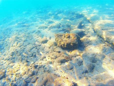 Beautiful seabed exotic sea, Photography Фото со стока