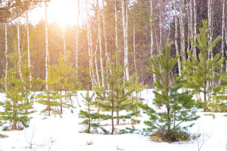 Winter landscape on the mountain, Winter idyll, Photography
