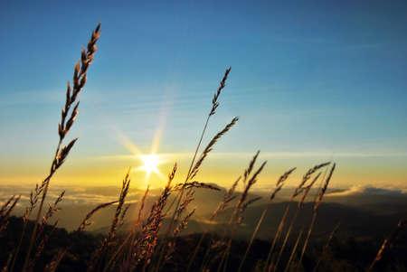 grassy sunrise  Stock Photo