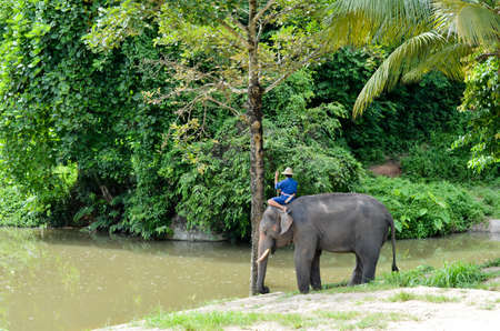 elephant Thailand with mahout  Stock Photo