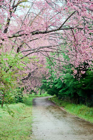 pink flowers path photo