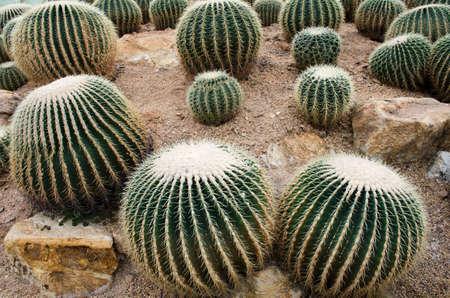 cactus garden photo