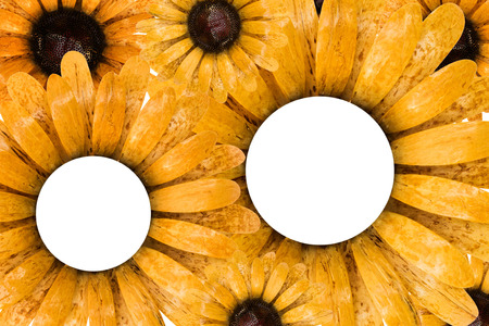 sunflower border picture frame coconut shell photo